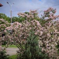 Цветы у Костела Святого Иоанна Крестителя. Минск. :: Nonna