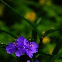 Цветы :: Сергей Дорогокупля