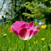 Цветок :: Міша Купчак