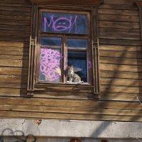 Кот в окне :: Евгений Кочетков