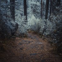 где-то в глубине леса :: Виктор Васильев
