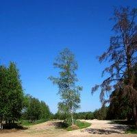 В родном лесу... :: Павел Зюзин