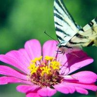 Бабочка :: Владимир Ткаченко
