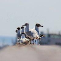 Птичий базар :: Артем Калашников