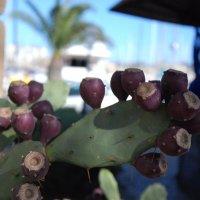 плоды кактуса :: Jekaterina K