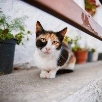 Греческий кот :: Мария Стоянова Тимбукту