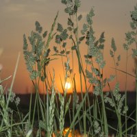 вечернее лето... :: Алексей -
