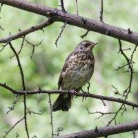 Какая это птица я не знаю.... :: Павел Савин