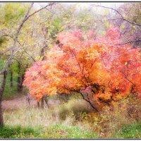 Осенние краски. :: Ирина Прохорченко