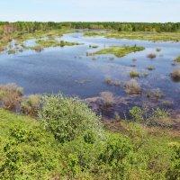Старица реки Ветлуга :: Анастасия Самигуллина