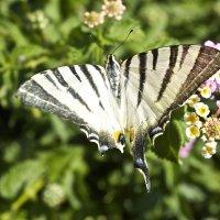 Бабочка :: Яна Радаева