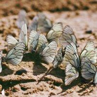 бабочки :: Татьяна Киселева