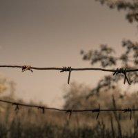 За колючей проволокой :: Krystyna Tykhonova