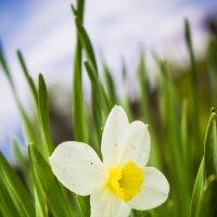 Белый цветок?!))) :: Роман