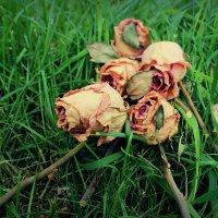 цветы :: Катрин