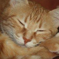 Спят усталые игрушки...и кошки спят... :: Oleg Gendelman