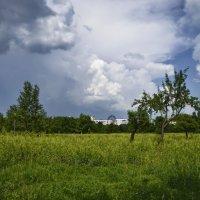 Лето в городском парке :: Татьяна Кретова