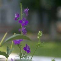 Цветы :: ylwkoda Шкодина