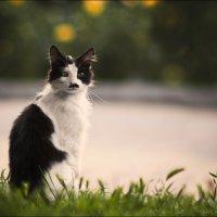 Кот с двойными усами :) :: Алексей Латыш