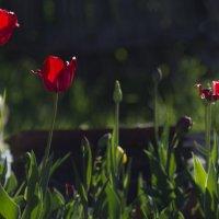 Мои цветы :: Вера Арасланова