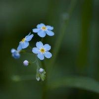 Полевой цветок :: Денис Мясников