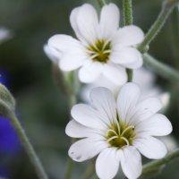 Цветочек :: Dmitriy Skiy
