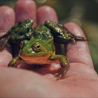 На меня лягушонок с любопытством смотрел...... :: Елена Kазак
