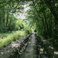 Дорога к народным ваннам 1 :: Нина Сигаева