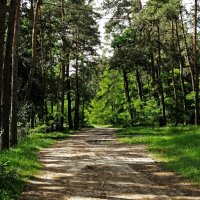 Летний день в сосновом лесу :: Владимир Бровко