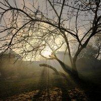 Старая яблоня :: Дмитрий Близнюченко