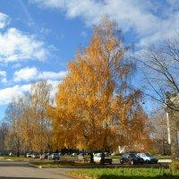 Осенние красоты родного города :: Alex Berz