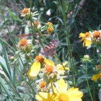 Цветочки и бабочка :: Валентина Миленина