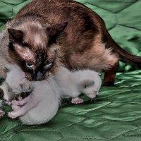 Мамка-из серии кошки очарование моё :: Shmual Hava Retro
