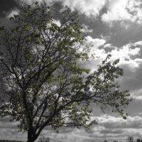 Дерево :: Виктория Власова
