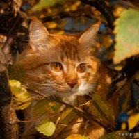 Рыжая осень :: Мария Бизунова