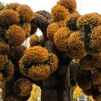Волшебное дерево :: Эмиль Файзулин