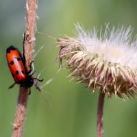 Флора и фауна :: Dr. Olver