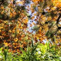 Осенние краски :: Эмиль Файзулин