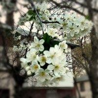Весна в фокусе. :: Ирина Прохорченко