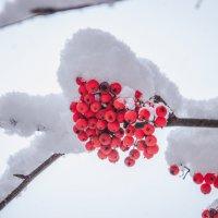 Первый снег :: Мария Бизунова