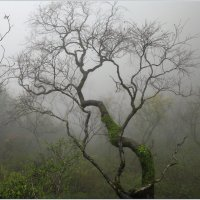 Туман :: Владимир Кабанов
