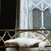 Кот лентяй-1. :: Руслан Грицунь