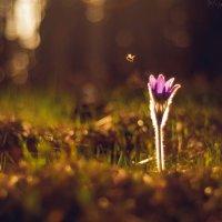 Пчелка :: Аннета Матыцына