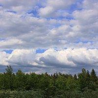 над лесом :: Наталья