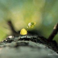 Новая жизнь :: Марк Поликашин