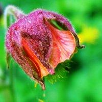 Цветик 1 :: Татьяна Нижаде