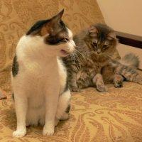 Разговор котов :: Татьяна Черняева