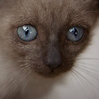 Усатый-полосатый! :: Катерина Шматова