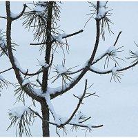 Зима :: Виктор Володин