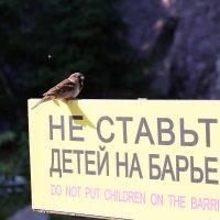 не ставьте детей на барьер :: Александр Корнелюк